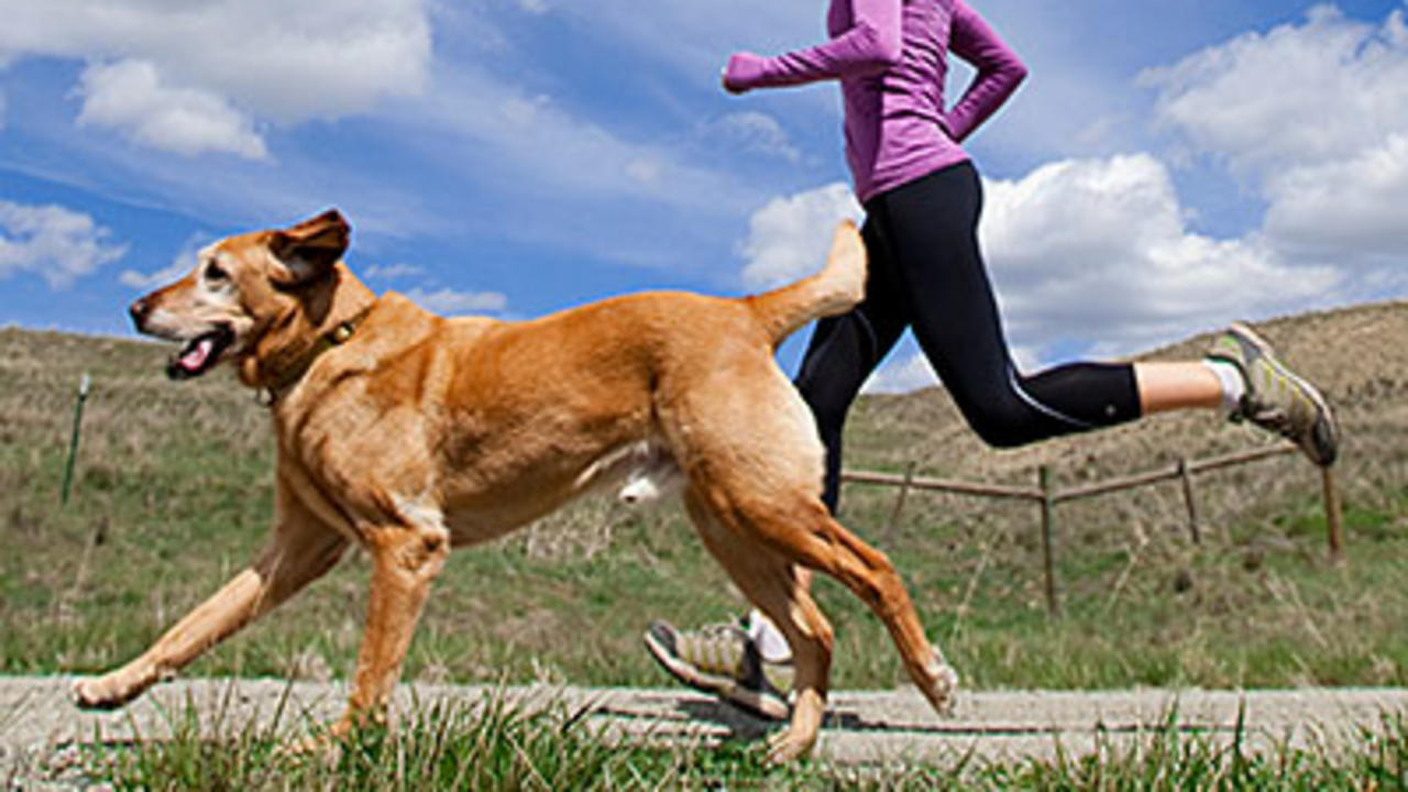 Outdoor Fitness With Your Pets