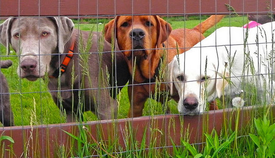 7 Types of Dog Fences