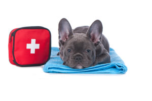 Pet Medical Emergency Preparedness: Tips That Will Get You Thinking