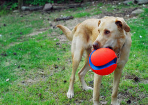 Fun Activities To Play With Your Pet Dog