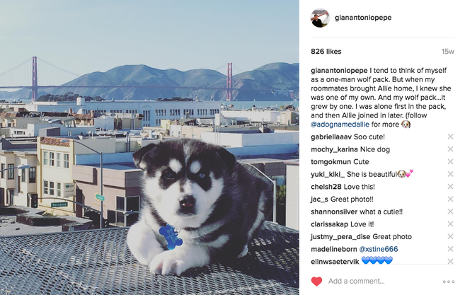 How To Make Your Pet Insta-Famous: Helpful Tips and Tricks