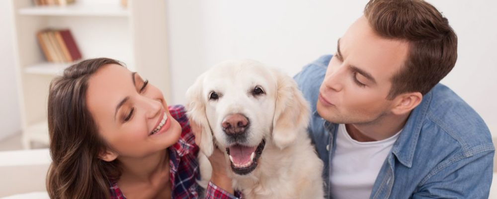 What to Consider When Buying a Dog