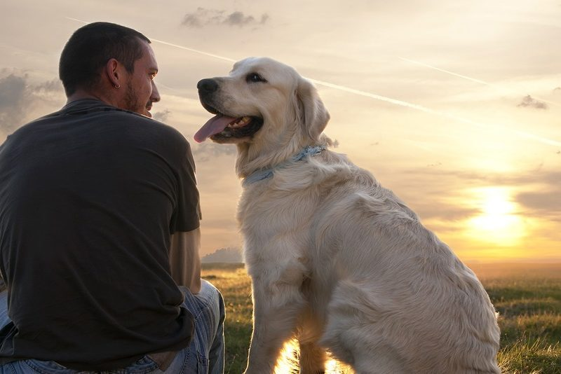 The Benefits That Pets Have Towards Your Lifestyle