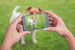 5 Apps Every Pet Owner Needs