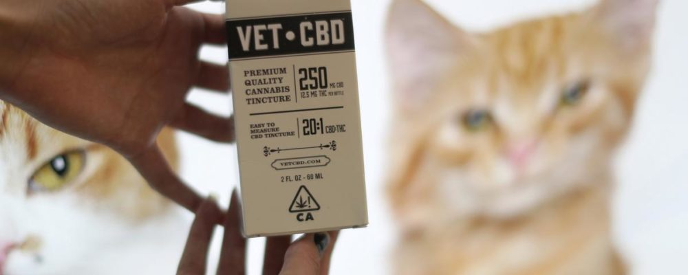 Good CBD Oil for Dog & Cat Arthritis – Top Cannabis for Pets Review