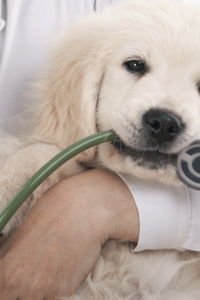 C:\Users\Administrator\Downloads\DogAndStethoscope.png