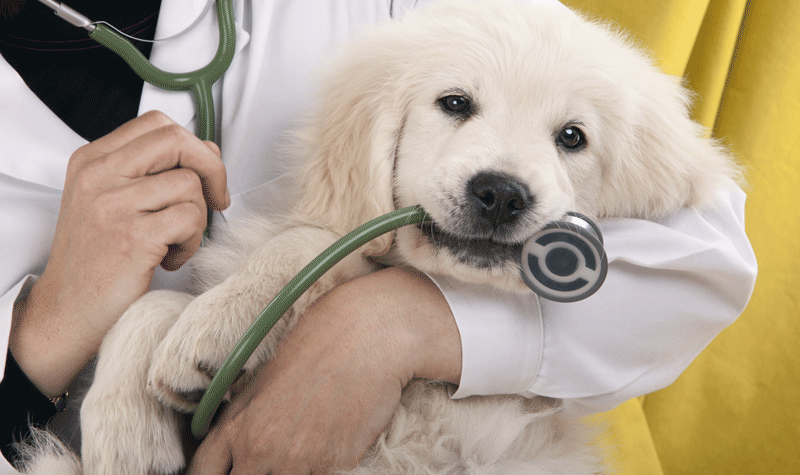 Abbotsford Vet – Choosing the Right Animal Hospital for Your Pet