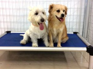 Dog Boarding in Coquitlam BC