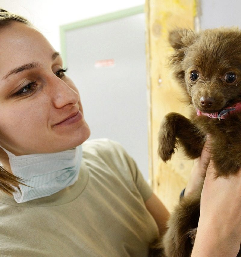 What Happens At An Abbotsford Vet Hospital