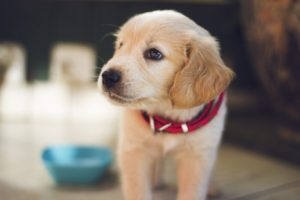 4 Tips to Buy Pet Insurance