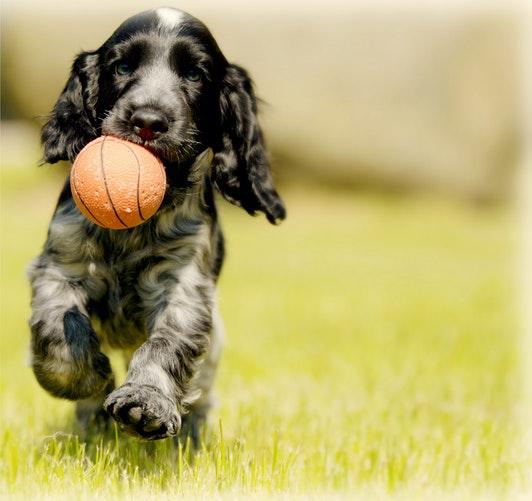 Top Vegan Dog Treats & Veggie Biscuit Chews for Puppies Buying Guide