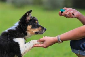 Train Your Canine – Basic Commands