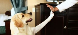 Enjoy Services of These 5 Pet-Friendly Hotels While Partying in Europe