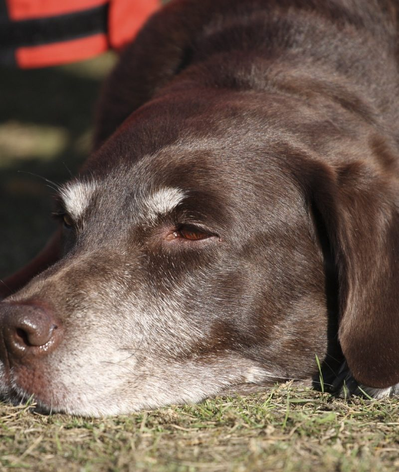 Senior Dogs: How Old is Old
