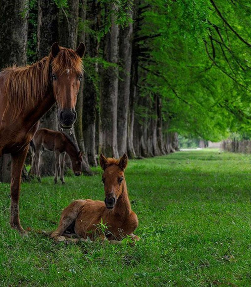 To Supplement Your Horse Or Not?