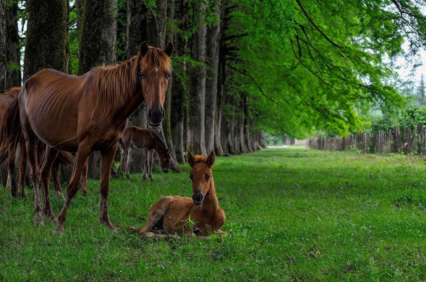 A brown horse standing on top of a grass covered field Description automatically generated