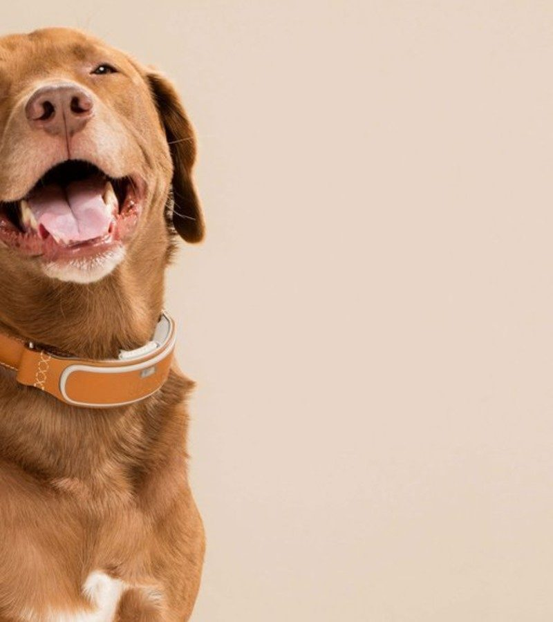 Why You Must Buy A Dog Collar To Train Your Dog?