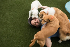 Trying Out Dog Daycare