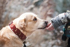 How Can Hemp Oil be Beneficial For Dogs?