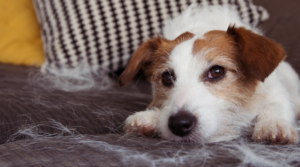 Major Signs of Stress in Dogs: A Look Out at your Pet's Health
