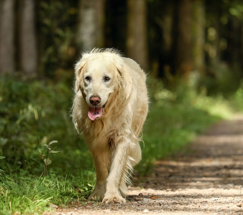 A Guide to Finding Your Lost Dog