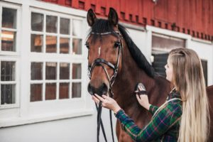 Why a Horse can be the Ideal Pet for Your Family?
