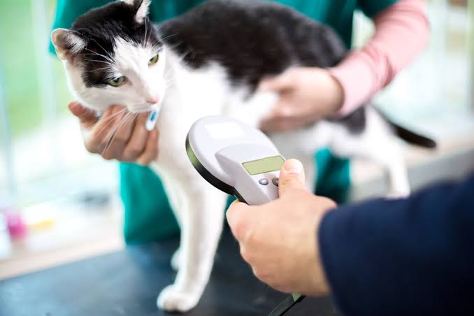 Why Mobile Veterinary practice is the new way forward?