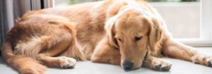 Ways to Help a Surviving Pet Deal with the Loss of Their Companion