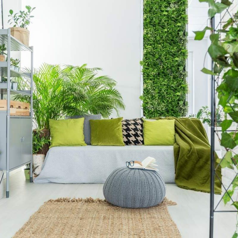 Indoor Plants – Deck The Interiors with Beauty and Feng Shui