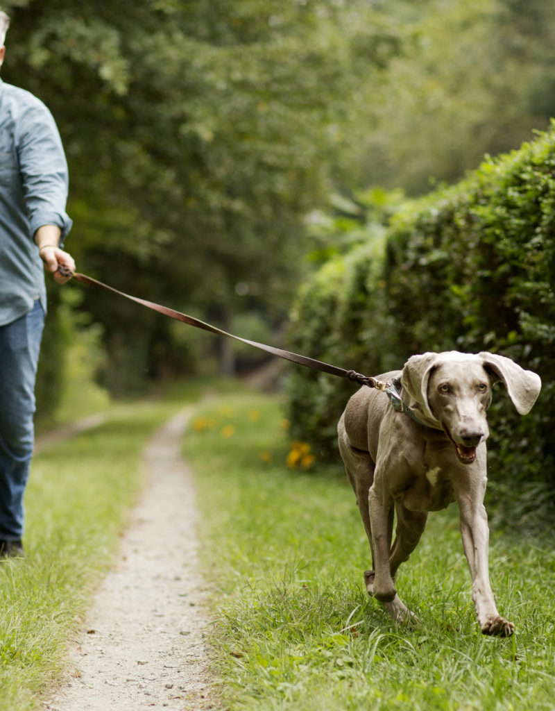 How to make sure your dog is getting enough exercise