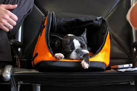 How Can Bags Be Family and Pet Friendly?
