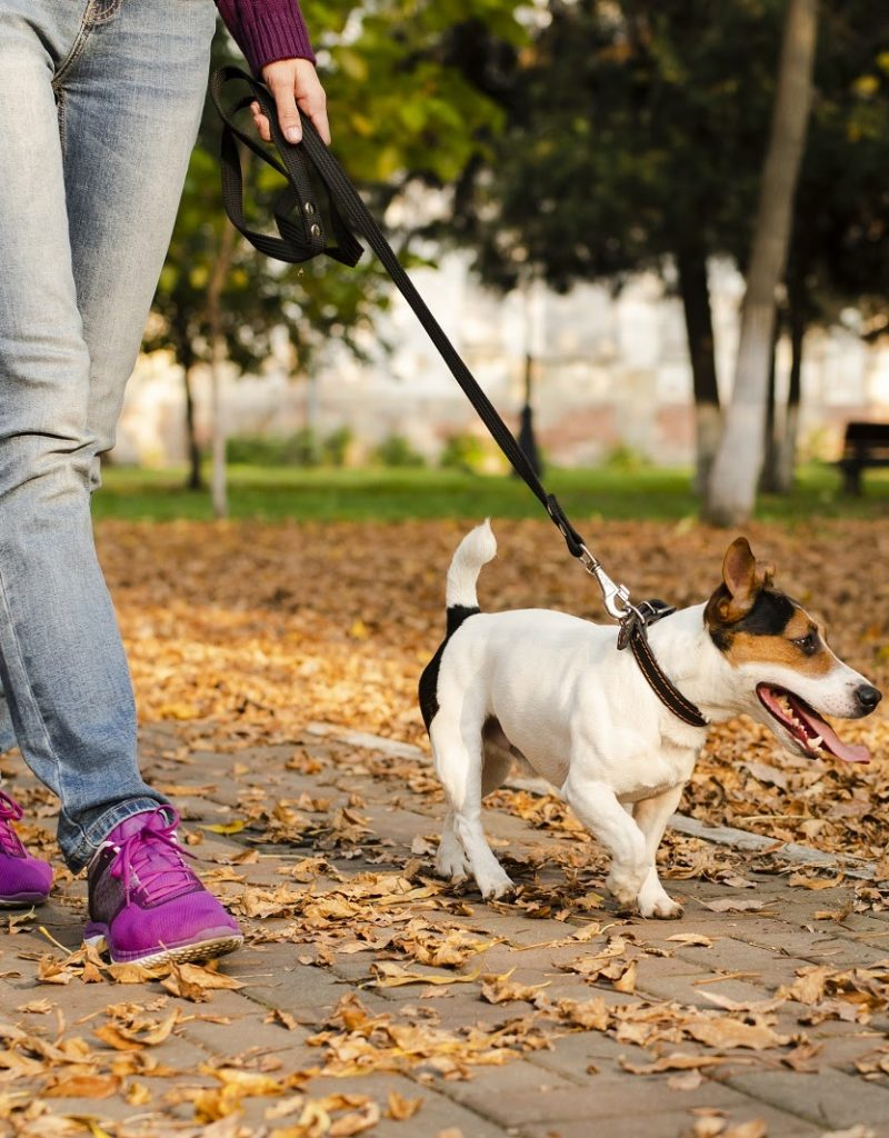 How to teach a dog to walking on a loose lead