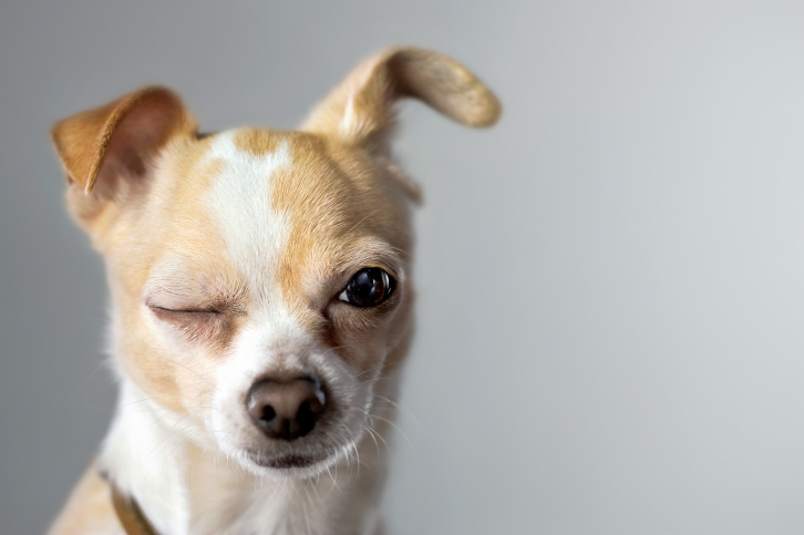 Fun Facts About Dogs That You Might Not Know
