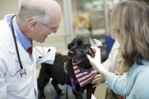 3 Services Offered by a Small Animal Hospital