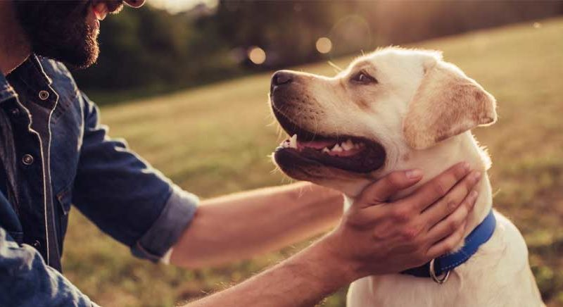 Is CBD Oil for Dogs Effective?