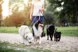 What Should I Consider When Looking for Pet Sitters Near Me