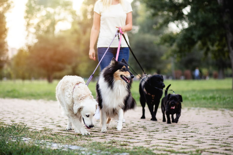 Pet sitter interview questions: 7 things to ask every candidate ...