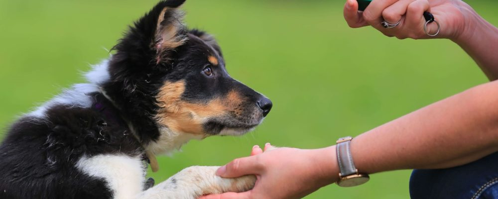 Hire The Dog Trainers At Good Dog To Train Your Dog