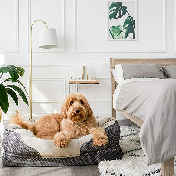 17 Best Dog Beds 2020 | The Strategist | New York Magazine