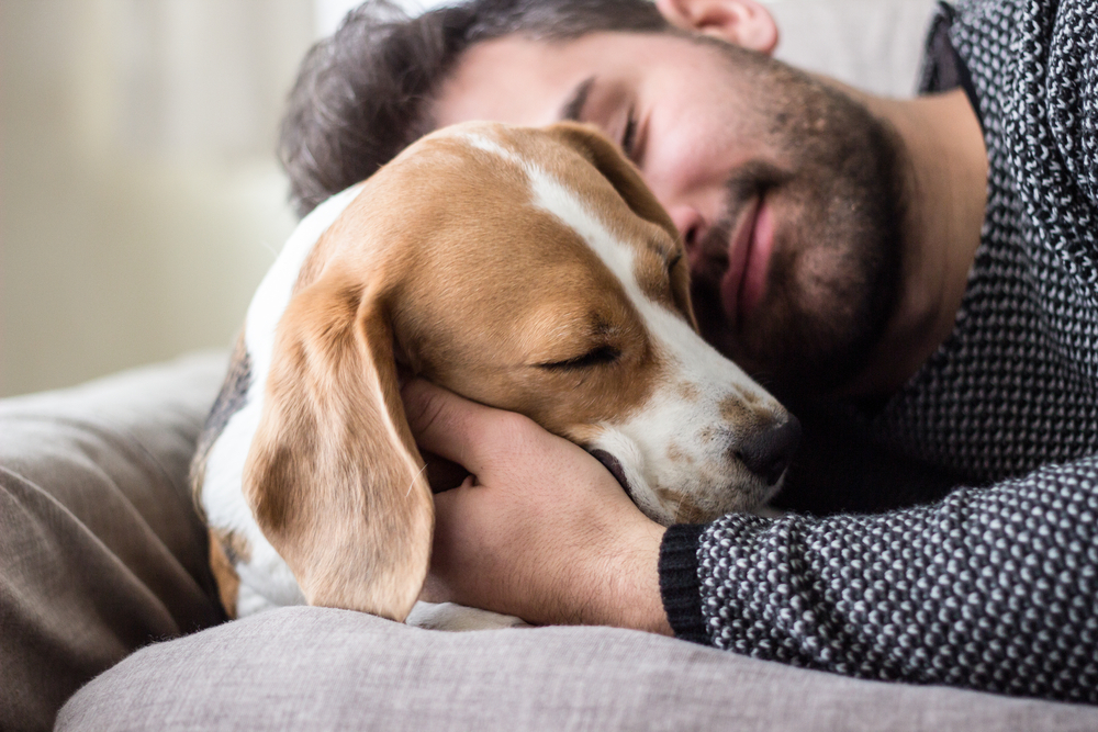 6 Tips on adopting the best dog for your lifestyle