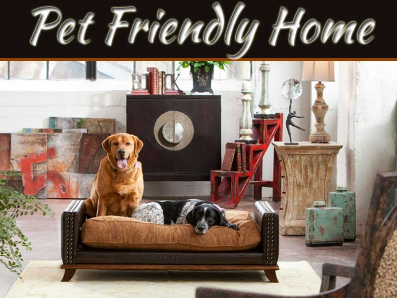 Tips For Pet Friendly Homes | My Decorative