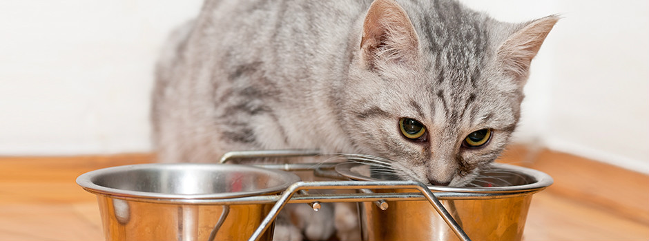 Buying the Best Kitten Food to Help with Cat Diarrhea