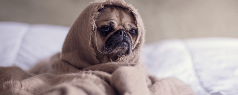 Moving is Making My Dog Anxious: Tips to Manage Pet Anxiety