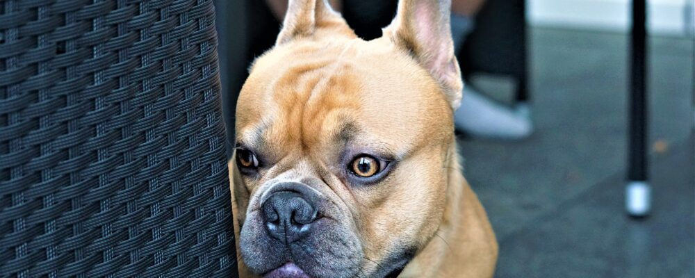3 Tips to Treat Your Dog's Fear of Fireworks