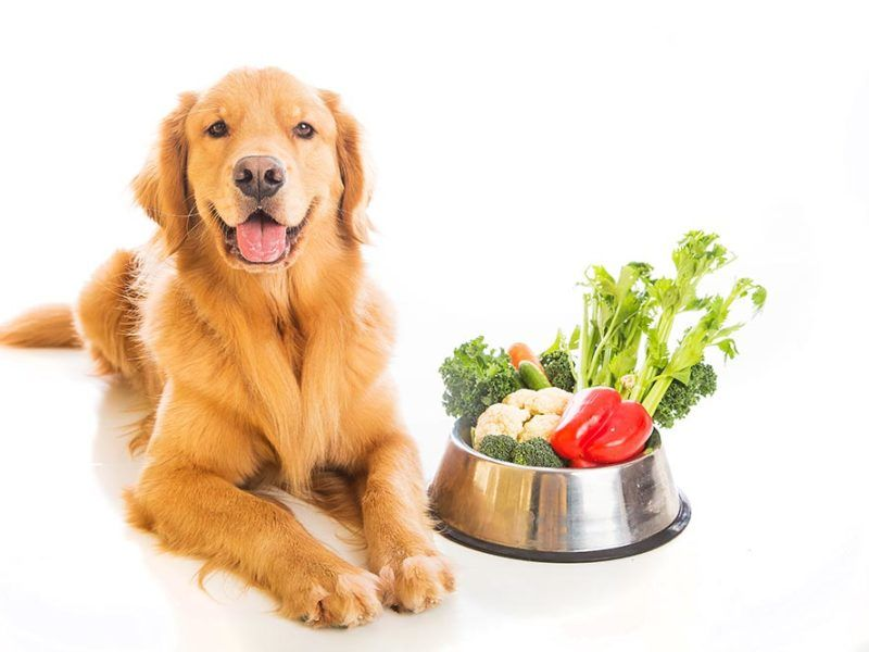Fruits & Vegetables Dogs Can and Can't Eat | Dog food recipes, Organic dog  food, Dog food brands