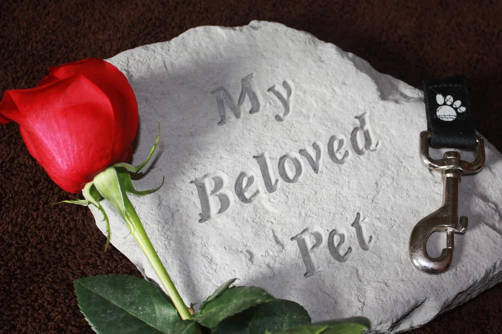 6 Special Ways to Honor a Dog You've Loved & Lost - The Dogington Post