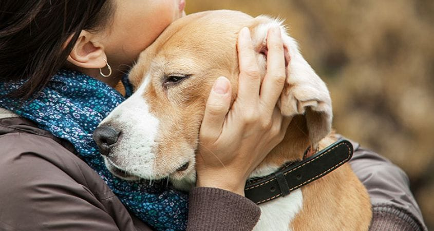 Why Grieving for a Dog is So Hard | Cesar's Way