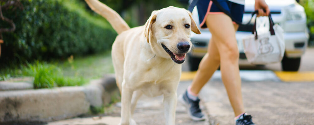 A Helpful Guide to Exercising with Your Dog
