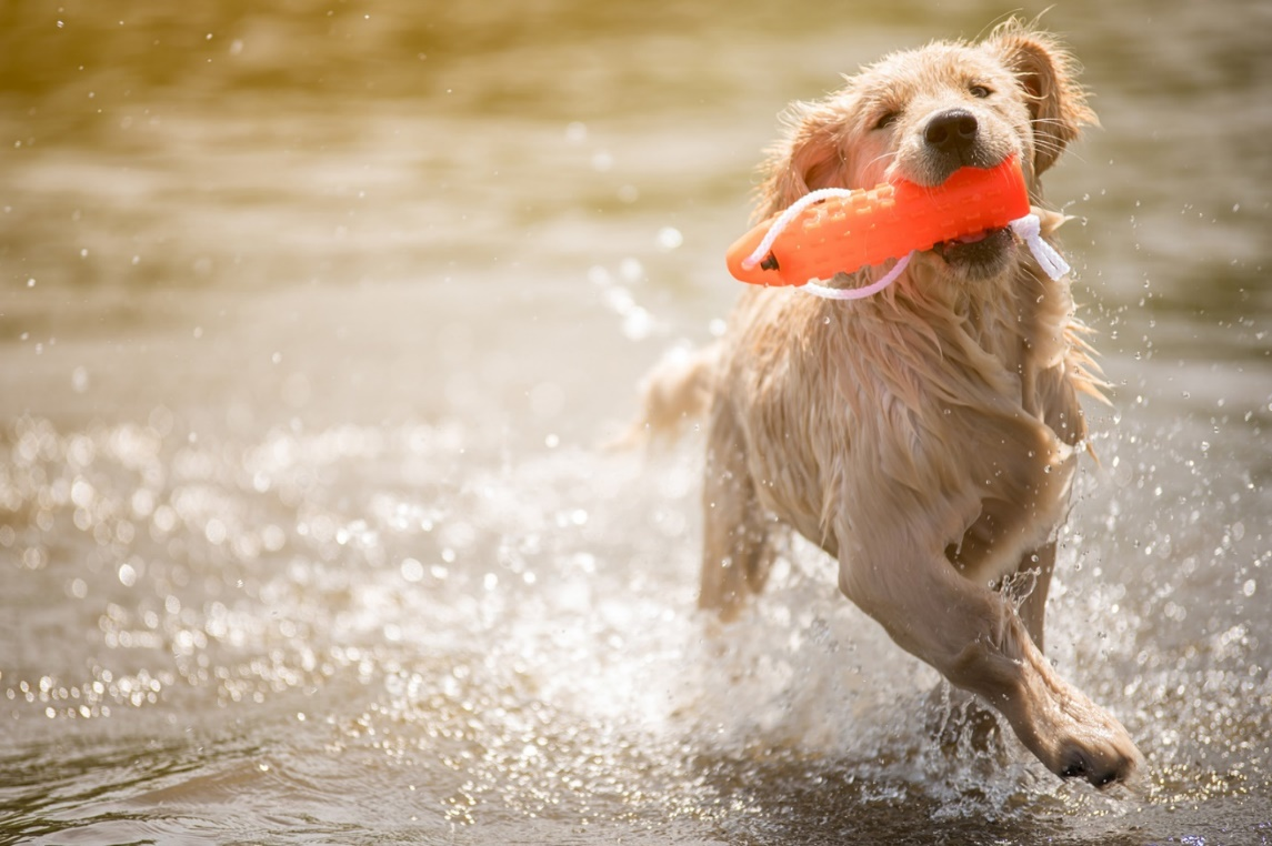 C:\Users\PC\Downloads\247986-1600x1066-dog-with-toy-in-water.jpg