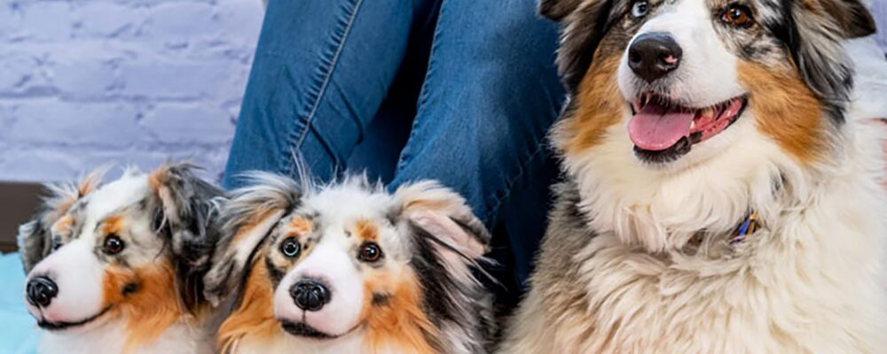 What Makes Pet Portraits Must Haves for Pet Lovers?